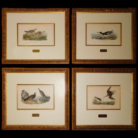 viyet-dc-audubon-lithographs